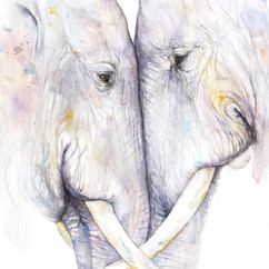 Twee olifanten in opdracht