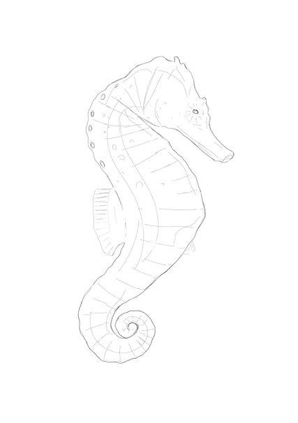 tekening_zeepaardje_A5.jpg