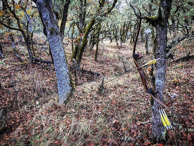 Barebow In the Blacktail Woods