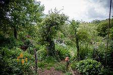 Photo jardin-Jungle.jpg