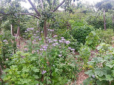 Photo jardin sauvage.jpg