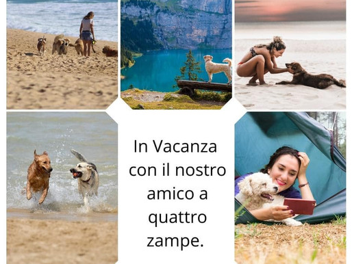 Le 5 cose da sapere quando vai in vacanza con il tuo cane?