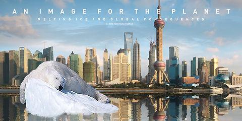 POLAR BEAR SHANGHAI 5.jpg
