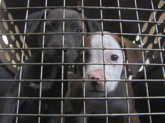Hub City Humane Society Helps Hundreds Of Animals Using Their Calendar Fundraiser