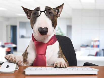 Dogs at Work: Finding the Right Dog for the Job