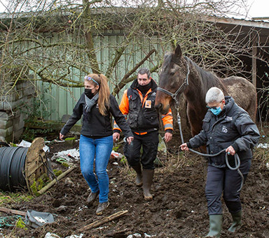Three horses saved from deplorable living conditions thanks to Liège's animal welfare network