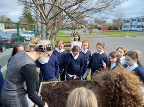 Planting time for 4th Class