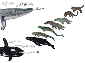 Marine Mammal project