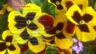 Poesias para viver