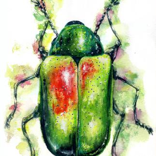 Beetle   Watercolor & Gouache