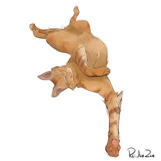 forweb_cat.png