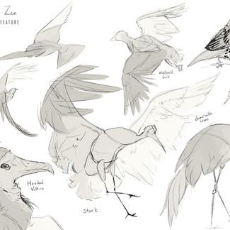 Study _ Birds