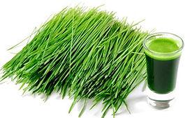 Zelený ječmen Green Ways