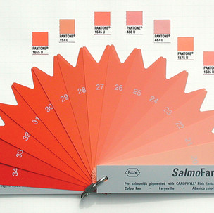 Pantone Salmon, or, salmon are what they eat