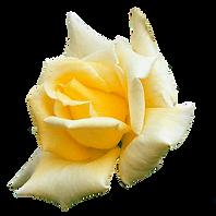 Rose_Yellow.png