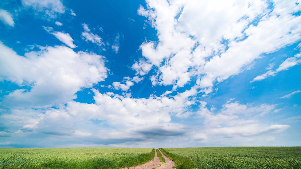 Green field and country road on a sunny summer day in kansas.jpg