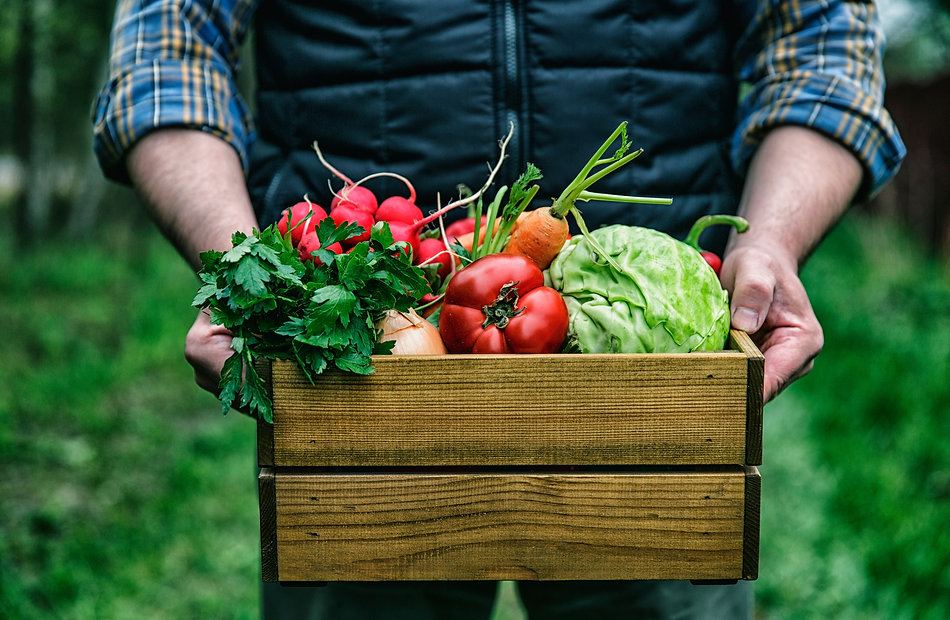 Wooden box with fresh farm vegetables in man's hands outdoors..jpg