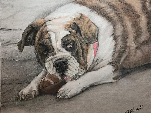 "8.5 x 11 -""Game Ready"" English Bulldog - Pastel Pencil"