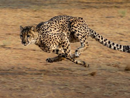 Operativ komplett überladen – agil heißt auch vernünftig!