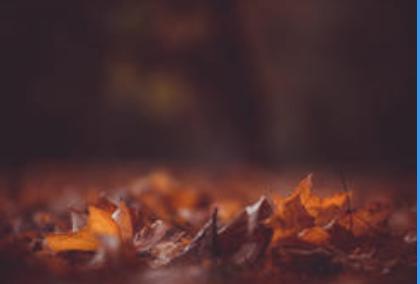 """Atelier d'écriture """"Mots et feuilles... d'automne"""""""