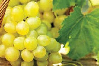 Vitis vinifera - Sultana Grape