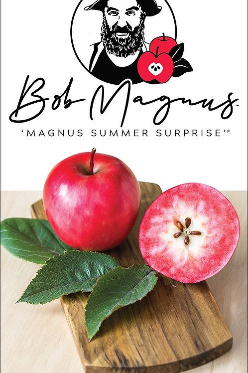 Malus domestica - Magnus Summer Surprise Dwarf