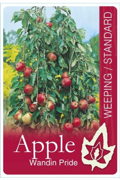 Malus domestica ' Wandin Pride' - Weeping Apple