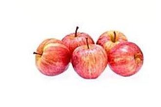 Malus domestica - 'Gala' Apple