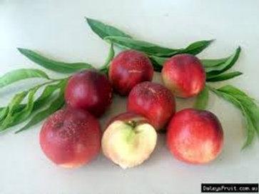 Prunus persica nucipersica - 'White Satin' Nectarine