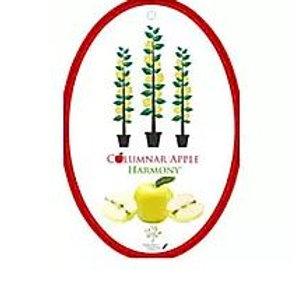 Malus domestica - Columnar Apple 'Harmony'