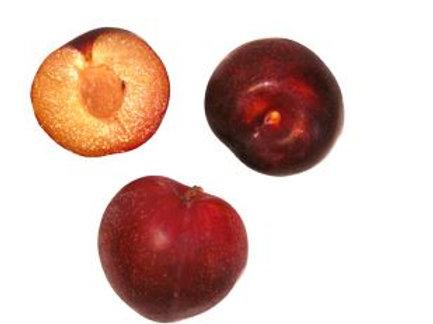 Prunus salicina - 'Laroda' Plum