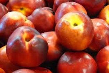 Prunus persica nucipersica - 'Sunlite' Nectarine