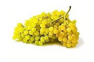 Vitis vinifera - White Grape 'Gordo Blanco'