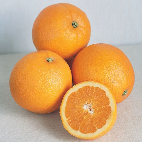 Citrus sinensis - Newhall Navel Orange