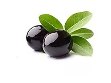 Olive europaea - Barouni