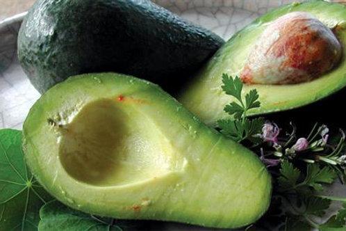 Persea americana (A) - Wurtz Avocado