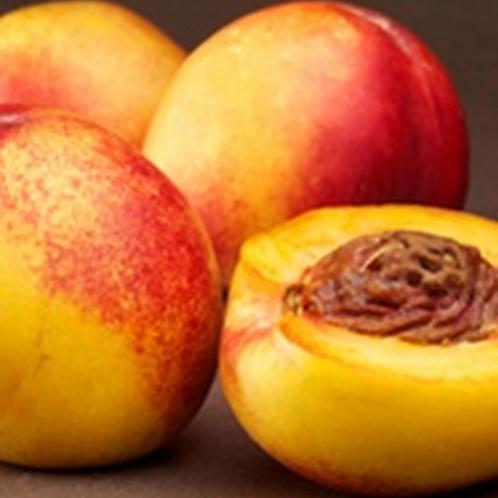 Prunus persica nucipersica - 'Fairlane' Nectarine