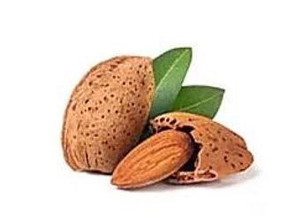 Prunus amygdalus - 'Brandes Jordan' Almond