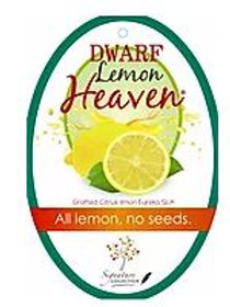 Citrus limon - Dwarf 'Lemon Heaven'