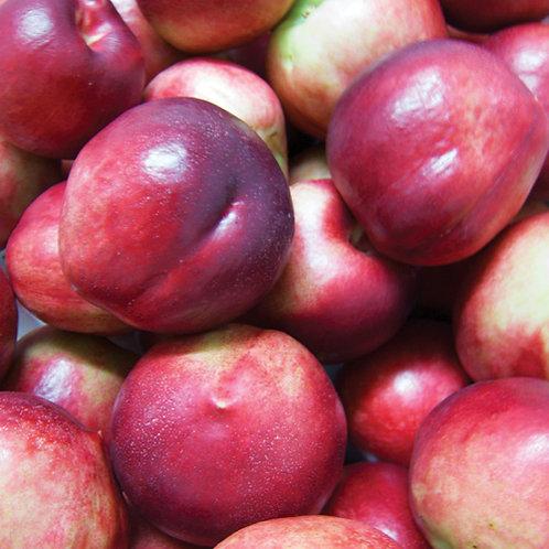 Prunus persica nucipersica - 'Sunsnow' Nectarine