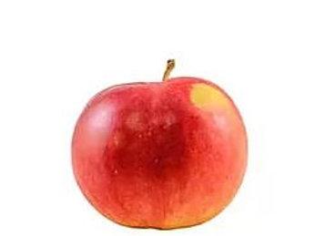 Malus domestica - 'Jonathon' Apple