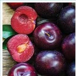 Prunus salicina - 'Mariposa' Plum