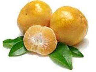 Citrus reticulata - 'Imperial' Mandarin