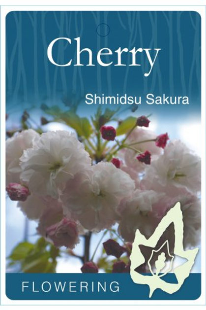 Prunus serrulata - Shimidsu Sakura