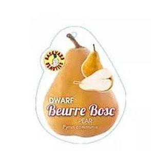Pyrus communis - 'Buerre Bosc Dwarf' Pear