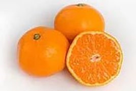 Citrus reticulata - 'Hickson' Mandarin