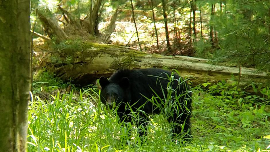 Im Stau auf Bärenschau