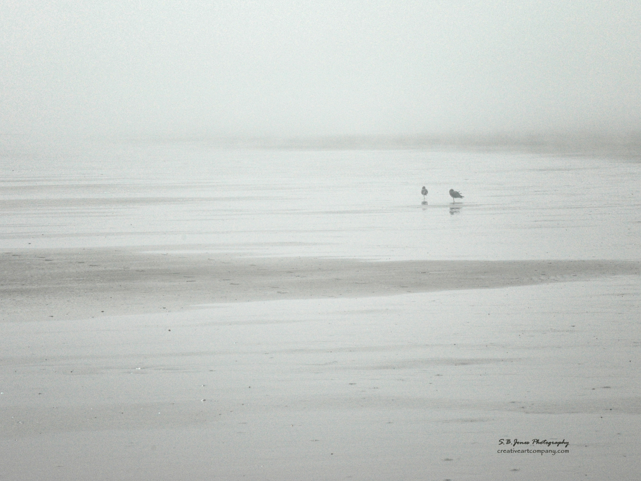 Two Gulls (1A)