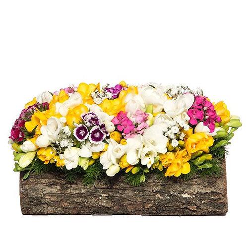 Kütükte Hüsnü Yusuf ve Renkli Frezya çiçeği