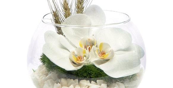 Fanus İçerisinde Orkideler